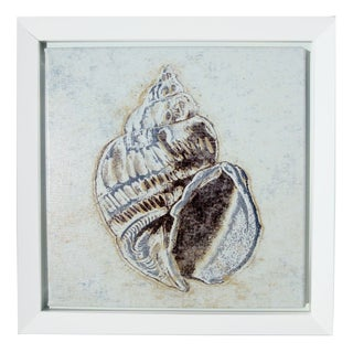 Framed Seashell Canvas Print For Sale