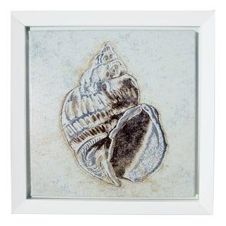 Framed Seashell Print For Sale