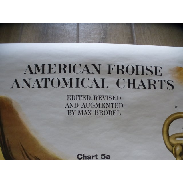 Vintage American Frohse Ear & Eye Anatomy Chart For Sale In Miami - Image 6 of 7
