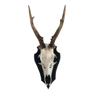 Mounted Black Forest Roe Antlers For Sale