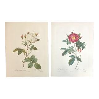 Pair of Botanical Prints After Joseph-Pierre Redouté For Sale