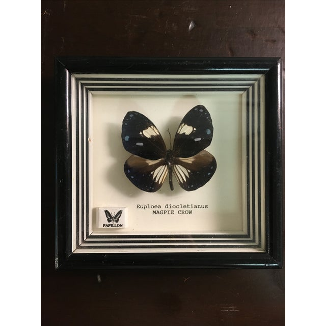 Framed Butterfly Specimens - Pair - Image 3 of 6