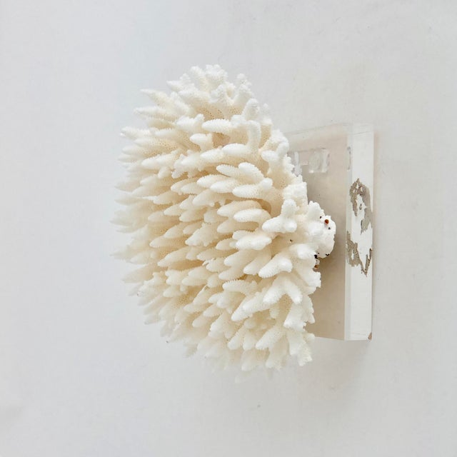 Asian Natural Table Coral Specimen Wall Sculpture For Sale - Image 3 of 7