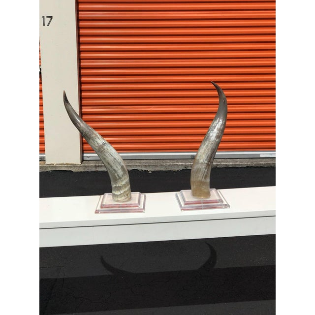 Tan Mid-Century Modern Horns on Lucite Bases - a Pair For Sale - Image 8 of 8