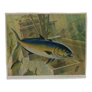 "Vintage ""Amberjack"" Color Animal Print by George L. Schelling Circa 1960 For Sale"