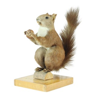 Vintage 1940s Taxidermy Squirrel on Wood, Czechoslovakia For Sale