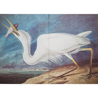 1960s Cottage Style Lithograph of a Great White Heron by John James Audubon For Sale
