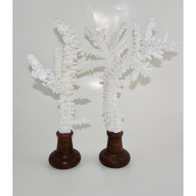White White Coral Branches Mounted on Round Wood Bases - a Pair For Sale - Image 8 of 8