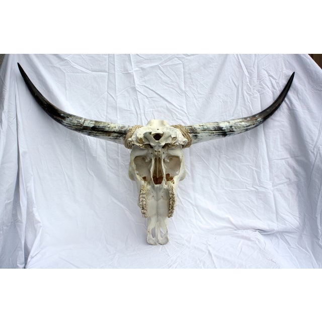 Rustic Texas Longhorn Skull For Sale - Image 3 of 5