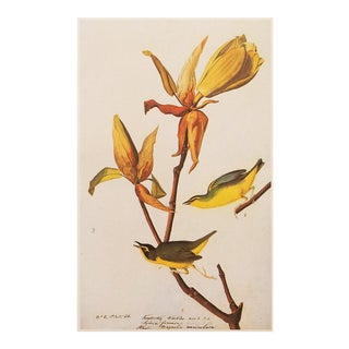 1960s Cottage Lithograph of Kentucky Warbler by Audubon