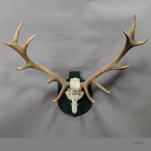 a very large uneven 14 pointer black forest deer trophy from the palace of salem in south germany. shoot by a member of...