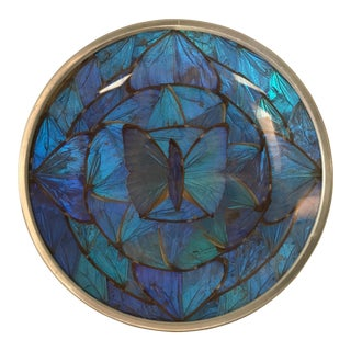Blue Morpho Butterfly Wing Art For Sale