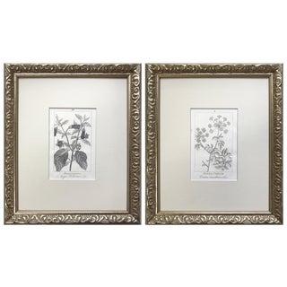 Antique 19th C. Italian Botanical Prints of Poisonous Plants Hemlock & Belladonna