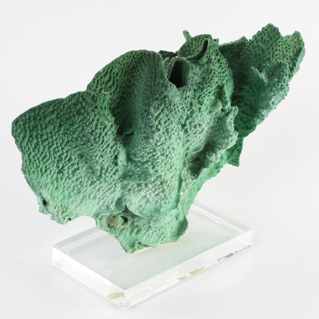 Green VINTAGE GREEN CORAL SPECIMEN MOUNTED ON A LUCITE STAND For Sale - Image 8 of 10
