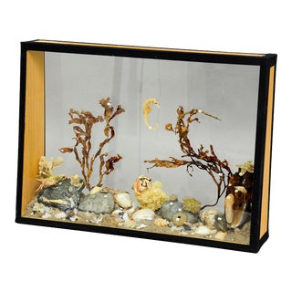 Antique Natural Wunderkammer Aquarium Specimen For Sale