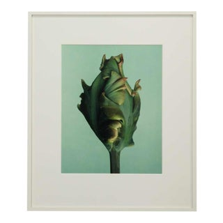 Set of three photo images from the Tulip series by Wiedeman For Sale