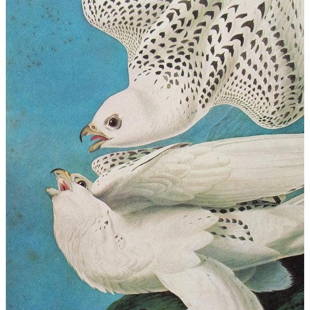 "1960s 1966 Cottage ""Gyrfalcon"" Vintage Print by Audubon For Sale - Image 5 of 11"