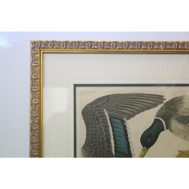 Japanese Mallards Print in Gilt Frame For Sale - Image 4 of 7