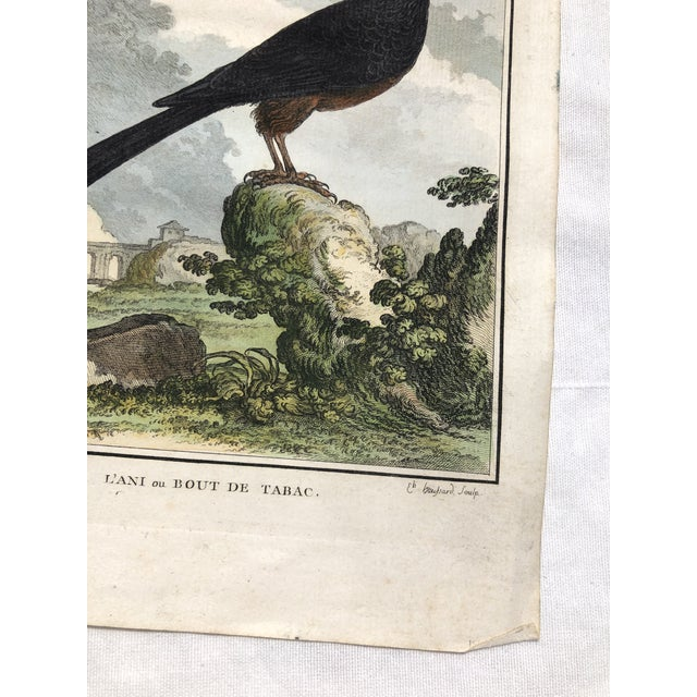 18th Century French Bird Engraving Signed by Jacques De Sève Featuring an Anis For Sale - Image 9 of 13