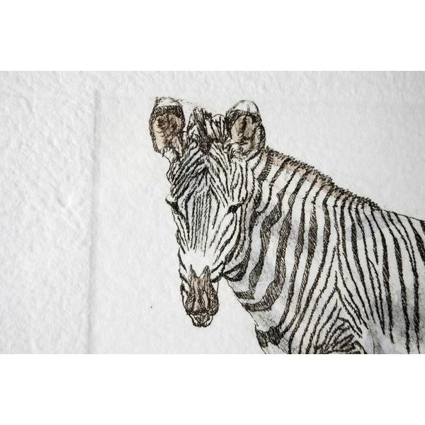 Zebra Hand Colored Engraving by Victor Hohne For Sale - Image 5 of 6