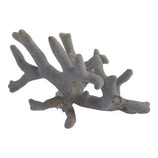 Natural Large White Sea Coral Specimen For Sale