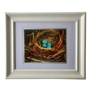 """Still Life Photograph """"Bird's Nest"""" Wall Art For Sale"""