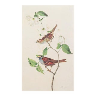 1960s Cottage Style Lithograph of a White-Throated Sparrow by Audubon