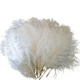 Naturally Shed Ostrich Feathers, 25 Piece For Sale