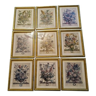 Set of 9 Vintage Botanical Prints in Gold Antique Frames For Sale