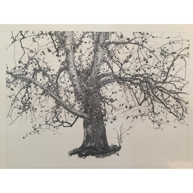 "Print of Andrew Wyeth's ""New Leaves,"" 1941 - Image 3 of 4"