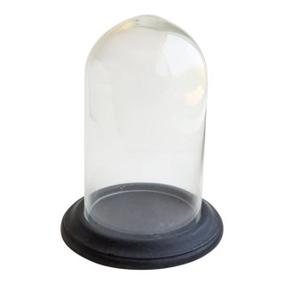 Traditional Glass and Black Wood Museum Display Glass Dome