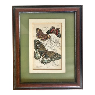 1840 Butterfly Hand Colored Engraving by Lizars For Sale