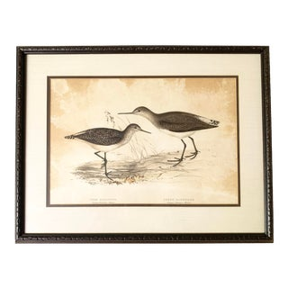 Antique Gould, Joseph Wolf, h.c. Richter Hand Colored Original Sandpiper Lithograph Artwork For Sale