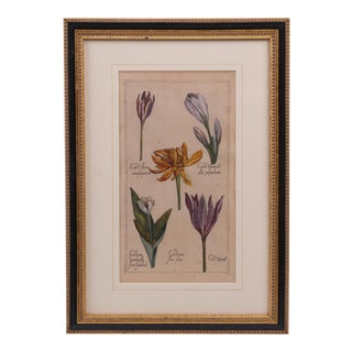 Hand Colored Copperplate Botanical Engraving For Sale