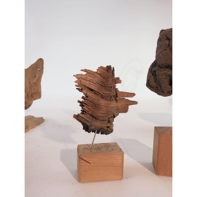 Mid 20th Century Collection of Abstract Driftwood Sculptures, Gloucester, Ma, Circa 1960s-1970s - Set of 9 For Sale - Image 5 of 13
