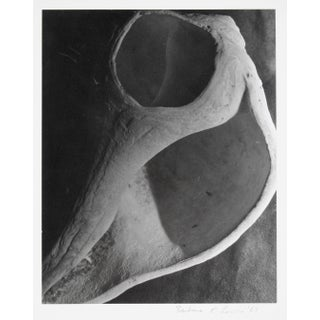 Barbara Lewis Study of a Bone, Framed Black and White Photograph, 1969 1969 Preview