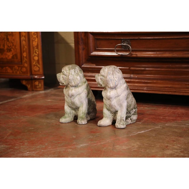 French French Vintage Patinated Cast Stone Saint Bernard Dogs Sculptures - a Pair For Sale - Image 3 of 9