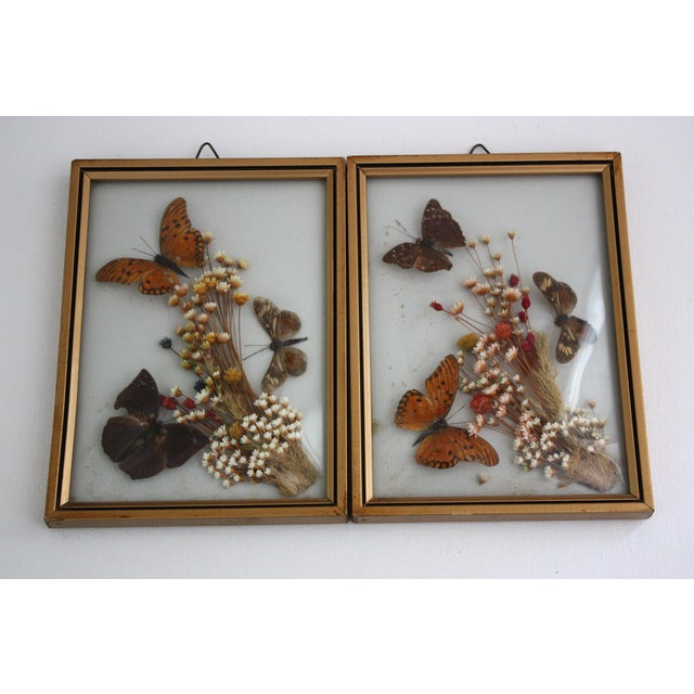 Framed Butterfly Specimens - A Pair - Image 2 of 4
