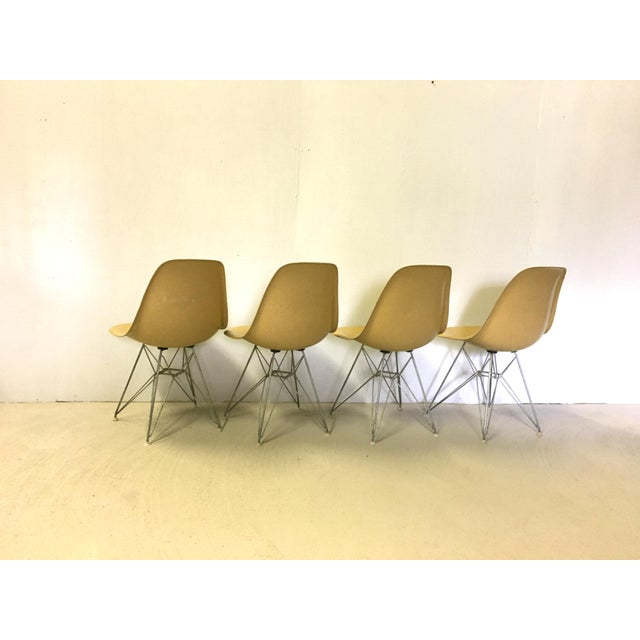 Mid-Century Modern Set of Four Herman Miller Eiffel Base Fiberglass Shell Chairs For Sale - Image 3 of 8