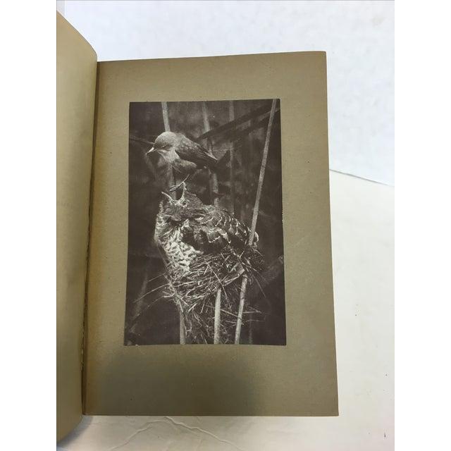 Vintage Ornithology Books - Set of 3 - Image 6 of 9
