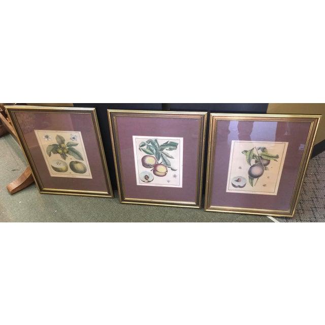 Antique Botanical Prints - Set of 3 For Sale - Image 9 of 9