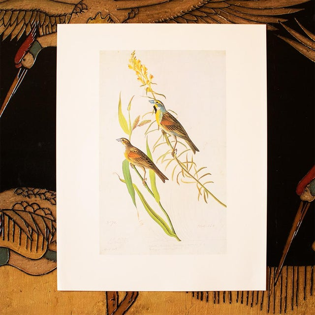 1960s 1966 Black-Throated Bunting & Dickcissel by John James Audubon, Cottage Style Lithograph For Sale - Image 5 of 8