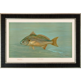 American Fish 24 the Spot, or Lafayette by Harris CFA Edition Giclee Print For Sale