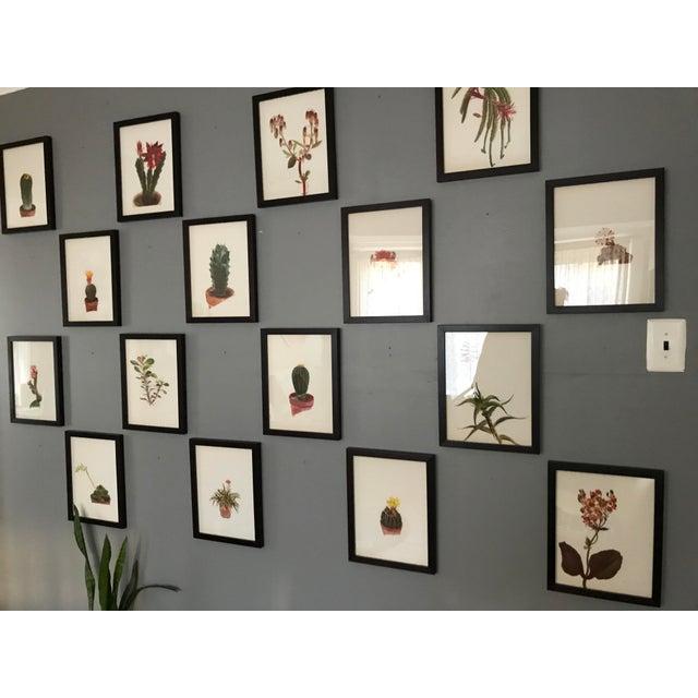 Green Framed Rock Plants - Set of 32 For Sale - Image 8 of 11