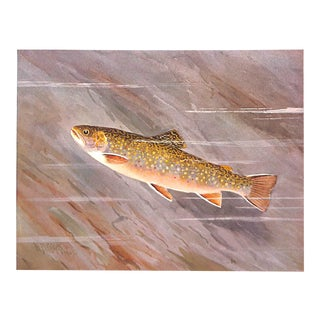 Brook Trout Fish Print, Antique Print 1909, Matted For Sale