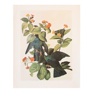 1966 Vintage Cottage Lithograph of White-Headed Pigeon by John James Audubon For Sale
