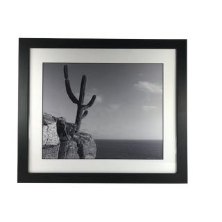 "Figurative Original Black and White Photograph, ""Cactus on a Cliff"" by Sergio Sanchez For Sale"