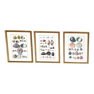 Vintage Ballard Design Seashell / Coastal / Nautical Prints in Gilt Wood Frame - Set of 3 For Sale