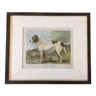 "1881 ""St. Barnard"" Framed Illustration For Sale"