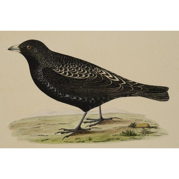 Antique Hand-Colored Aviary Wood Engravings - A Pair - Image 3 of 9